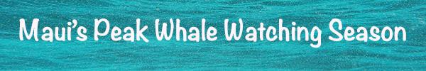MV_TITLE BANNER_Maui's-Peak-Whale