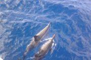 Lanai Snorkel cruises Dolphins