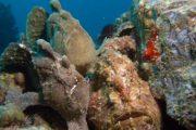 Rock Fish Scuba Maui