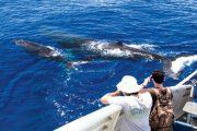 Pwf Whale Watch Maui