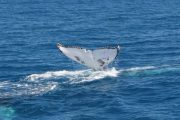 Trilogy Whale watch