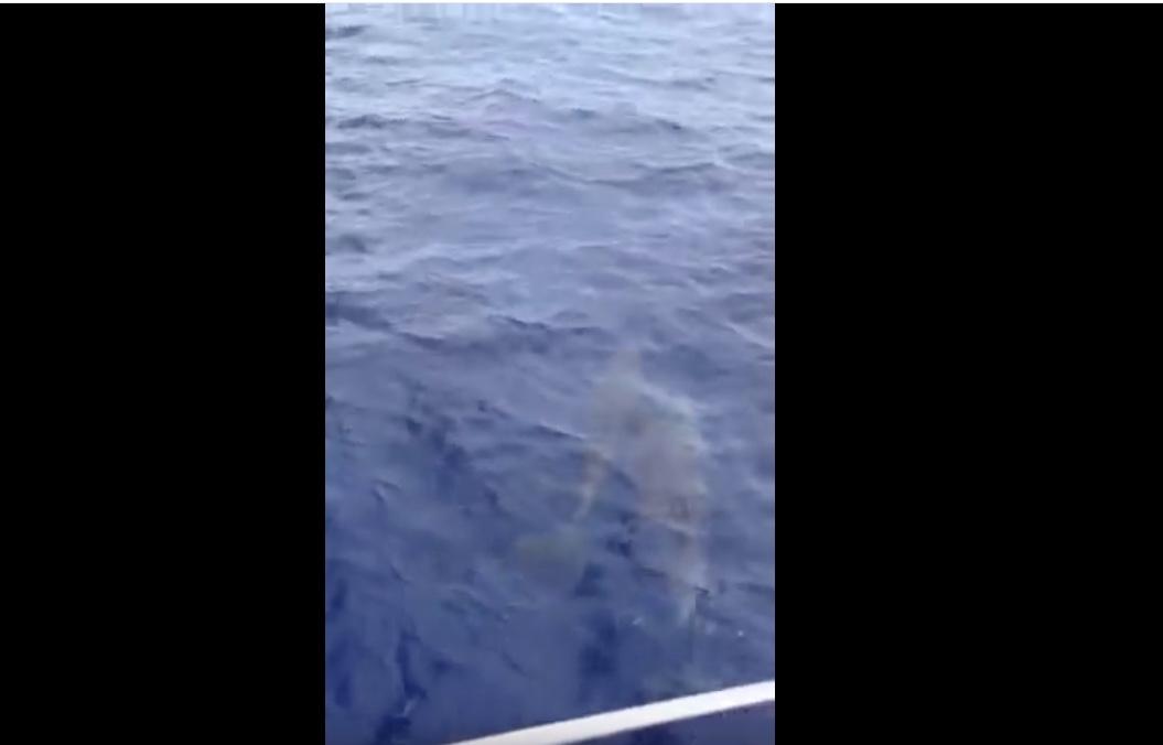 Trilogy to Lanai Snorkel Cruise Dolphins