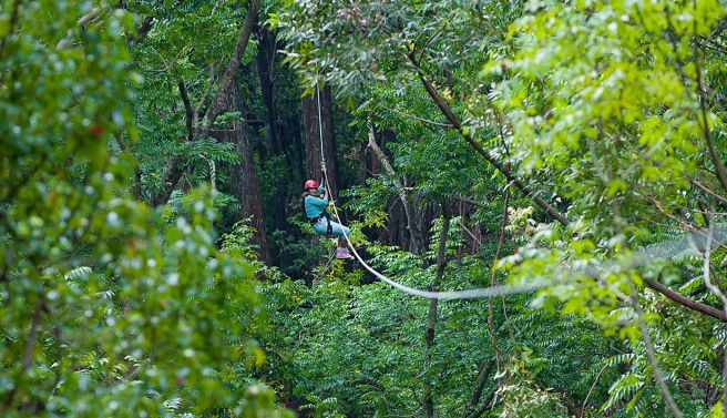 Maui Zipline Tours Piiholo Ranch Tree Top