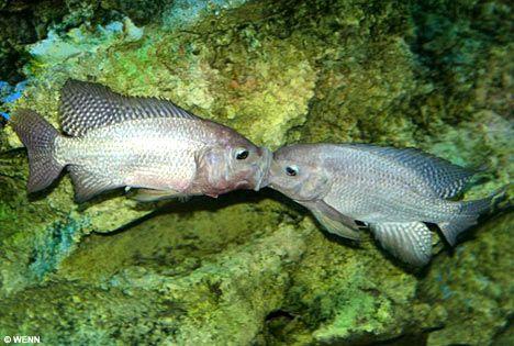 Scuba Luv Maui Fish