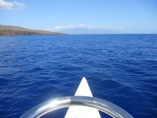 Paragon Sailing Charters Lanai dolphins