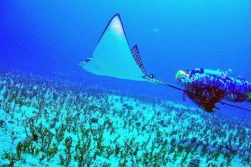 Scuba Luv Maui diver