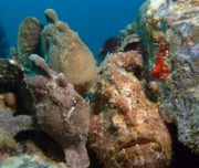 B&B scuba wreck Dive