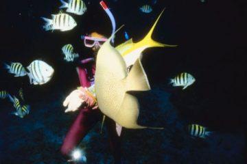 B&B scuba Fish Maui
