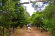 Kaanapali Horseback Ride