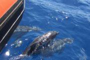 Ocean Riders Lanai Snorkel Dolphins