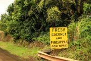 Polynesian Adventure Tours Sightseeing Hana Maui