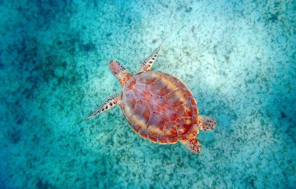 Redline Rafting Molokini Snorkeling