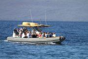 Maui Adventure Cruise