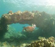 Snorkeling underwater tunnels