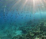 Snorkeling underwater Fish