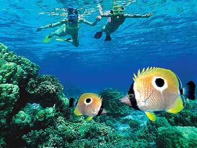 Quicksilver Snorkeling Cruise