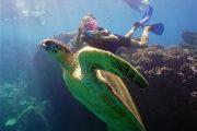 Quicksilver Molokini snorkel with Turtles
