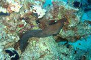 Seafire Molokini Snorkel Tour Eel