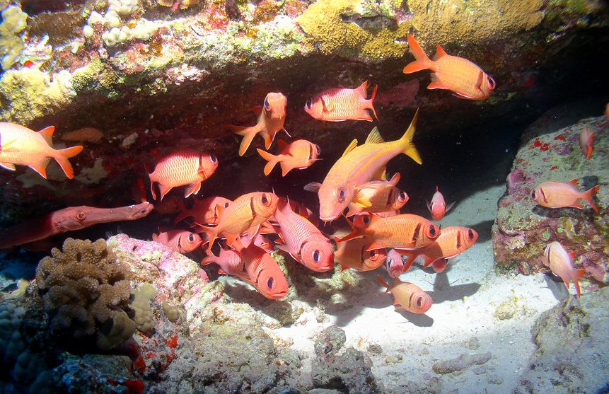 Seafire Molokini Snorkel Tour red fish
