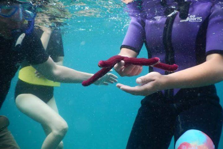 Seafire Snorkel tour starfish