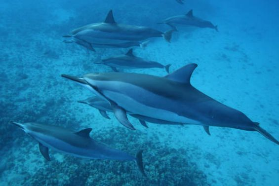 Oahu Snorkel and Dolphin Cruise