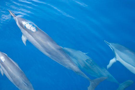 Molokini snorkel Tour dolphins