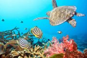 Snorkel Turtle and Coral
