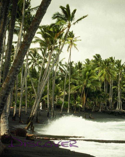 Big-Island-Volcano-Tour-Black-Sand-Beach-Coconut-Grove