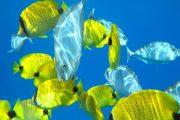Maui-Molokini-snorkel-Tours