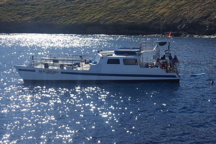 Maui's-Cheapest-snorkel-Tour-Turltes