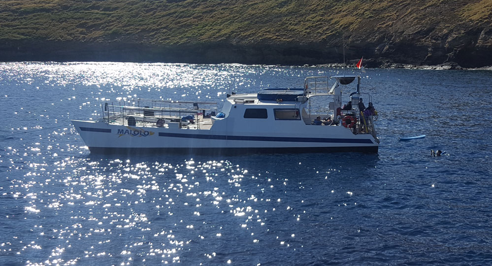 Maui's Cheapest snorkel Tour Turltes